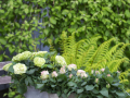 Infinity Evergreen 1.jpg