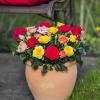 Roses Forever mix 2.jpg