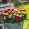 Roses Forever mix 3.jpg