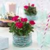 Roses Forever party 1.jpg