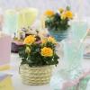 Roses Forever party 2.jpg