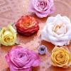 rosa_050